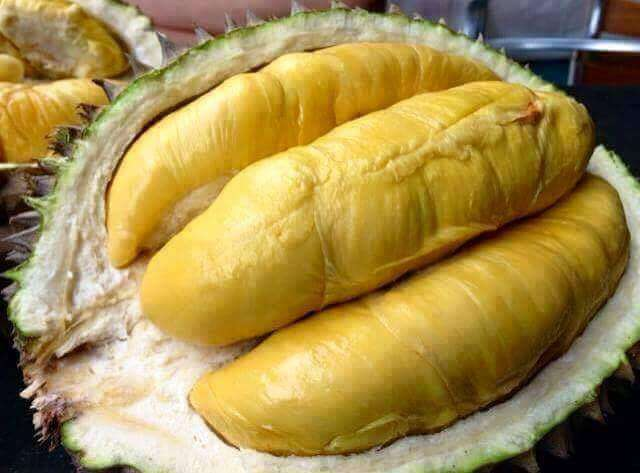 durian-montong-thailand